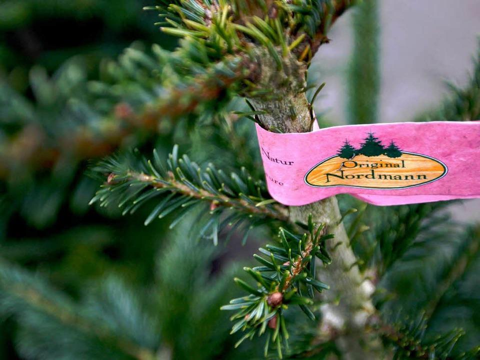 In Weihnachtsbaumkulturen werden auch Pestizide eingesetzt.   | Foto: dpa