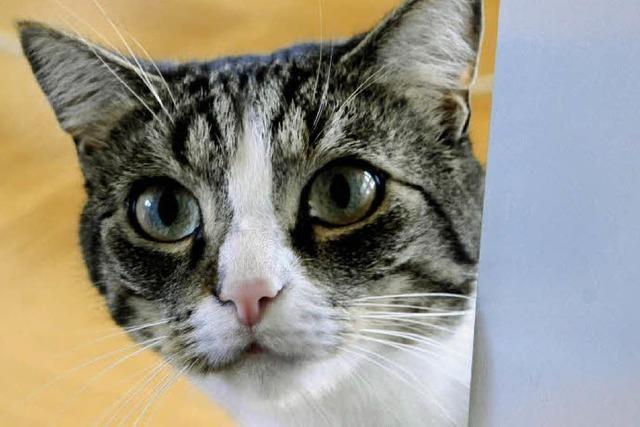 40 bis 50 Dosen Katzenfutter am Tag
