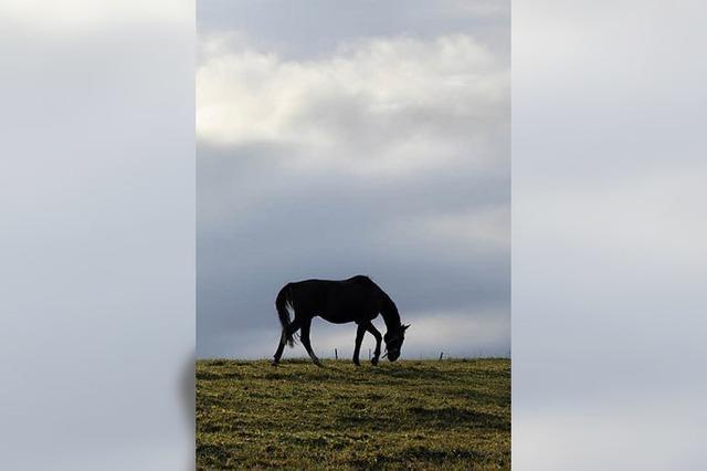 Es gibt zwei Pferdearten
