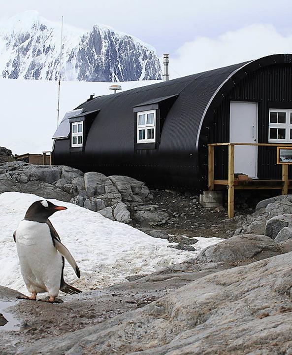 Jemand da? Ein Pinguin vor  der britischen Forschungsstation    Foto: Win Schumacher