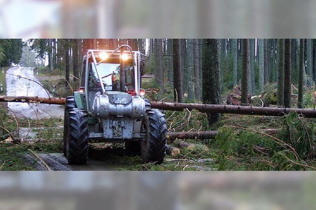 Forst plant mit Überschuss