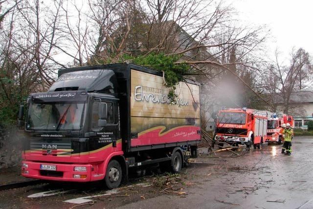 Bad Krozingen: Baum kippt auf Lastwagen