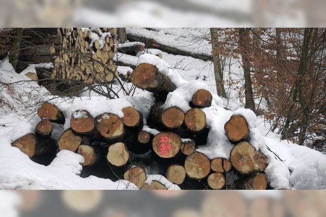 Forst bereitet viel Freude