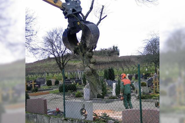 Umgestaltung des Friedhofs wird angegangen