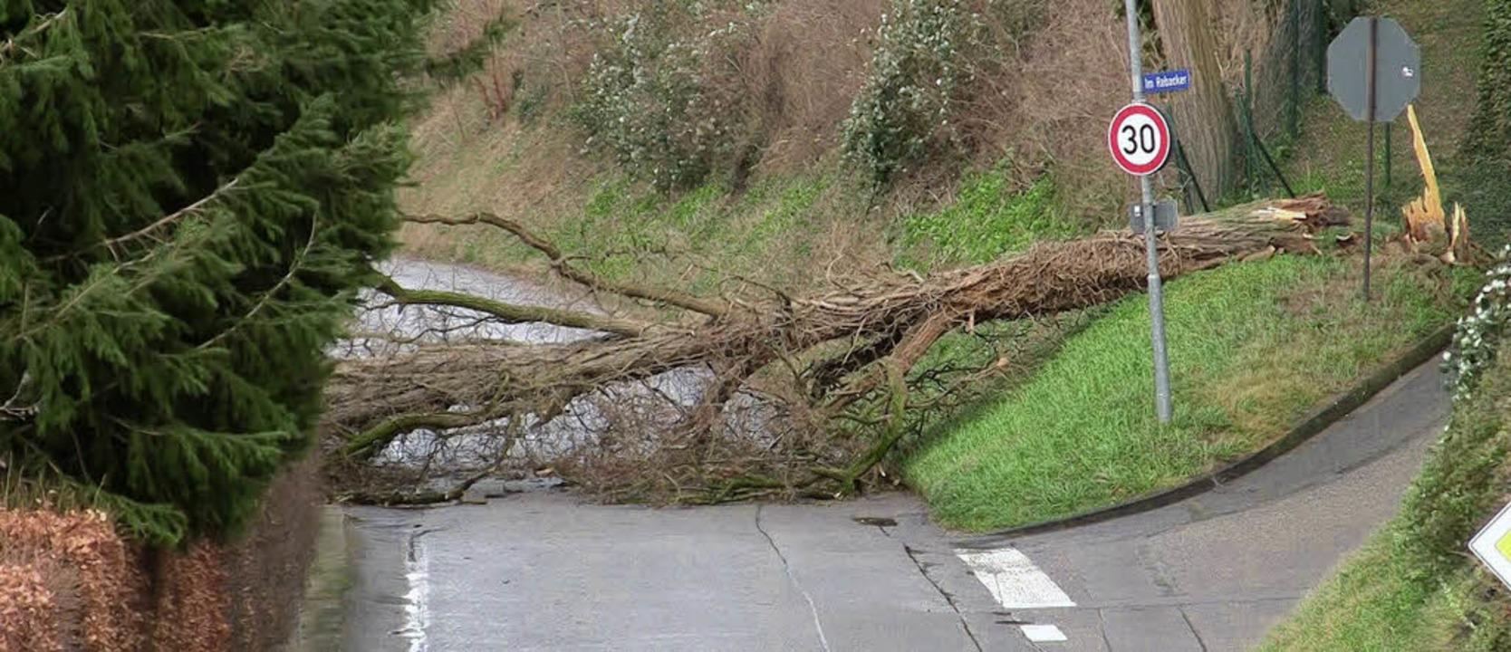 Dieser Baum in der Mahlberger Straße in Atdorf hielt Joachim nicht stand.    Foto: Sandra Decoux-Kone