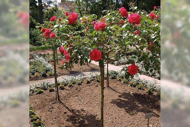 Gut gerüstet ins Gartenjahr 2012