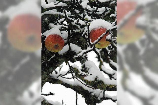 VON 1 BIS 24: Schnee macht die Nacht noch stiller