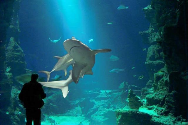 Ozeanium-Projekt des Basler Zoos kommt voran
