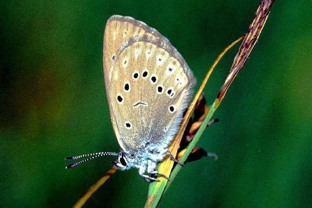 Schmetterling bremst geplanten Brunnen aus