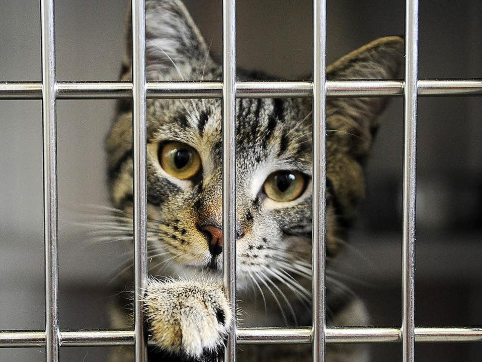 Nach Weihnachten war sie nicht mehr erwünscht: Katze im Tierheim  | Foto: DPA