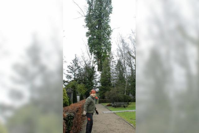 Eine Birke am Haken