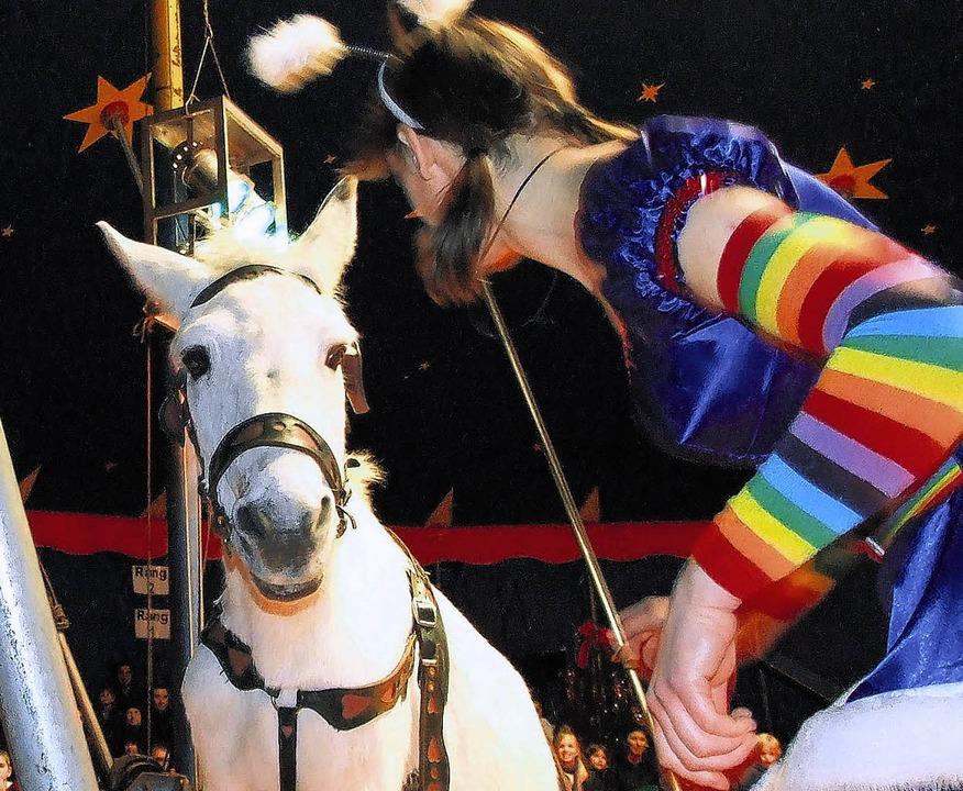 Maultier Isolde vom Circus Luna hält n...Probleme mit dem störrischen Maultier.    Foto: Freudig