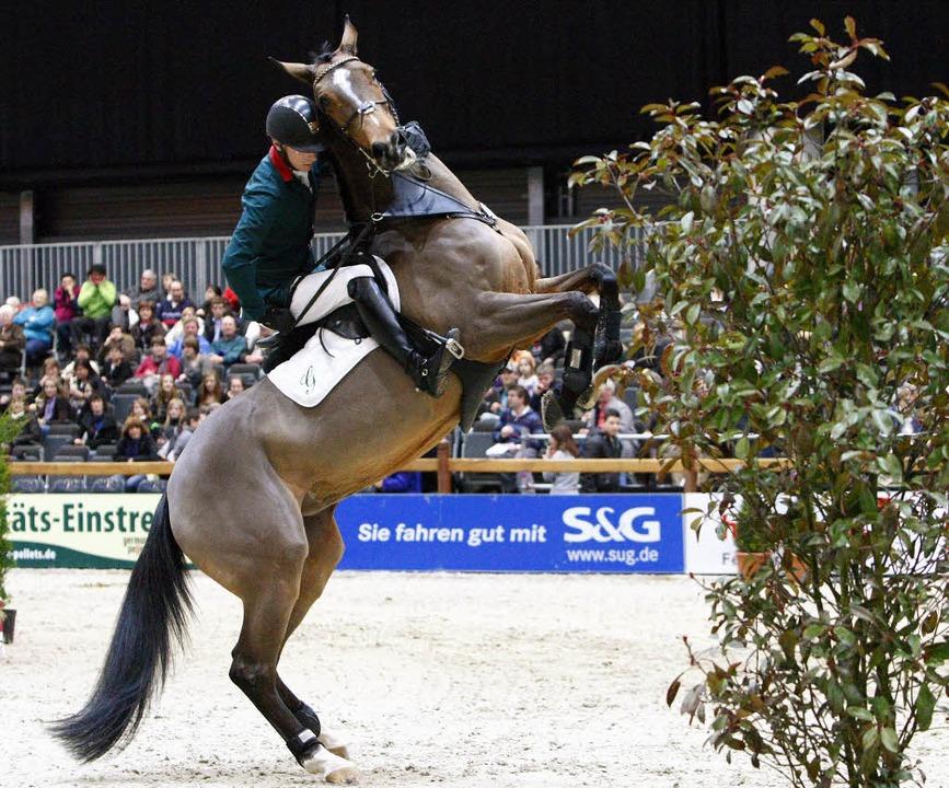 Nervenstarke Pferde sind gefordert bei...von Offenburg und weiteren Prüfungen.   | Foto: Archiv: Faruk Ünver