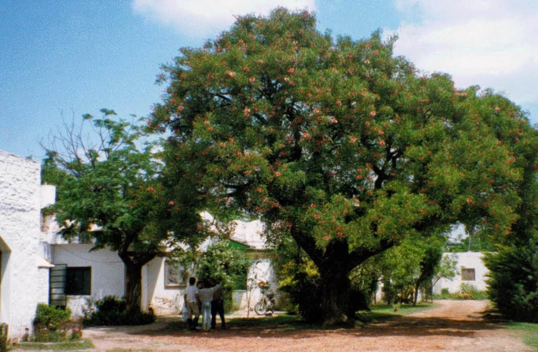Der mächtige Korallenbaum (spanisch: &...anja gab dem Heim einst seinen Namen.     Foto: BZ-Archiv/Barbara Schmidt