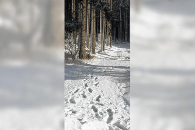 Die letzte Rettung: ein Baum im Wald