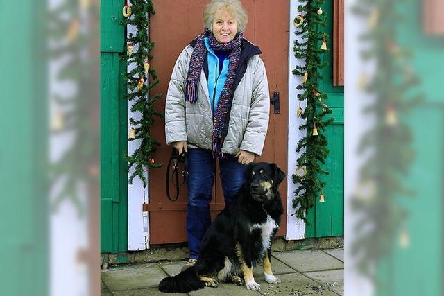 Familienhund sucht neues Zuhause