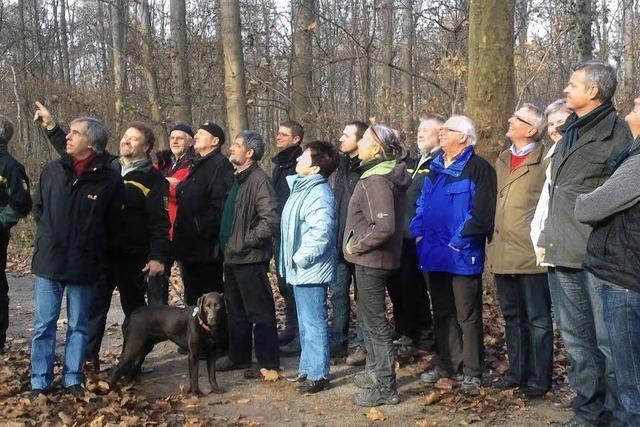 Ein Zehnjahresplan für den Breisacher Gemeindewald