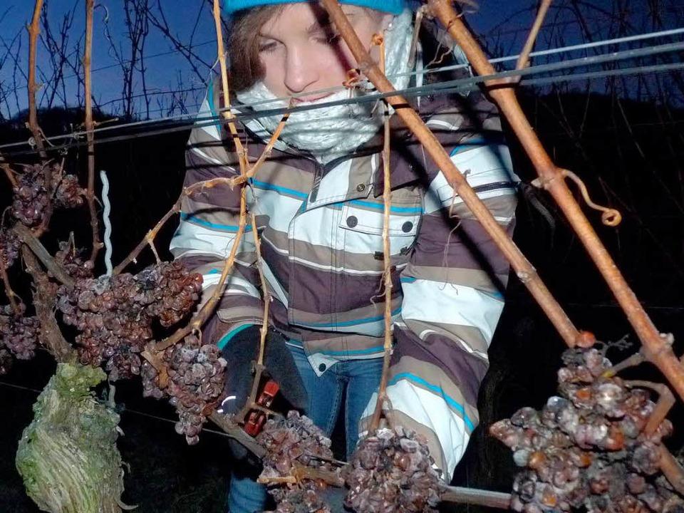 Am frühen Morgen des 17. Januars konnt...adische Weinkönigin Natalie Henninger.  | Foto: Christel Hülter-Hassler