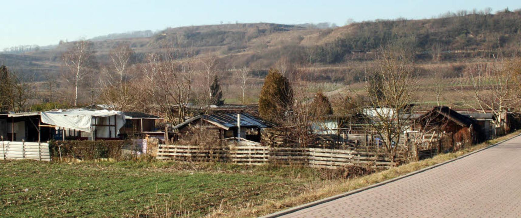 In dieser Kleingartenanlage am Rande e...as Opfer im Sommer 2011 vergewaltigt.     Foto: Horst David