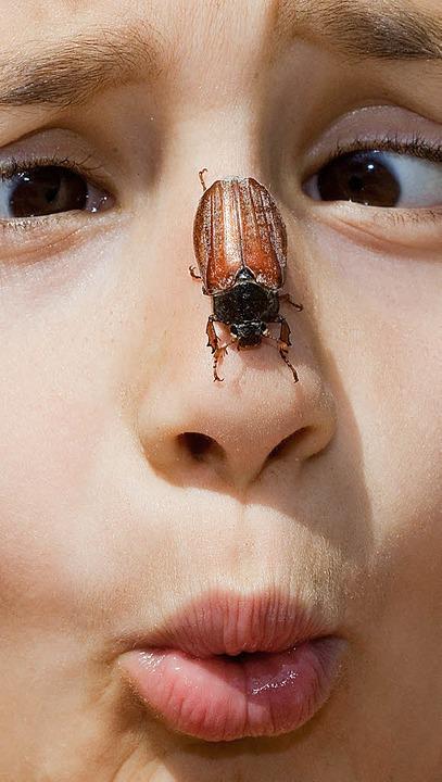 Schau mal, was da krabbelt –  in...können auch Maikäfer gefühlt  werden.   | Foto: DPA