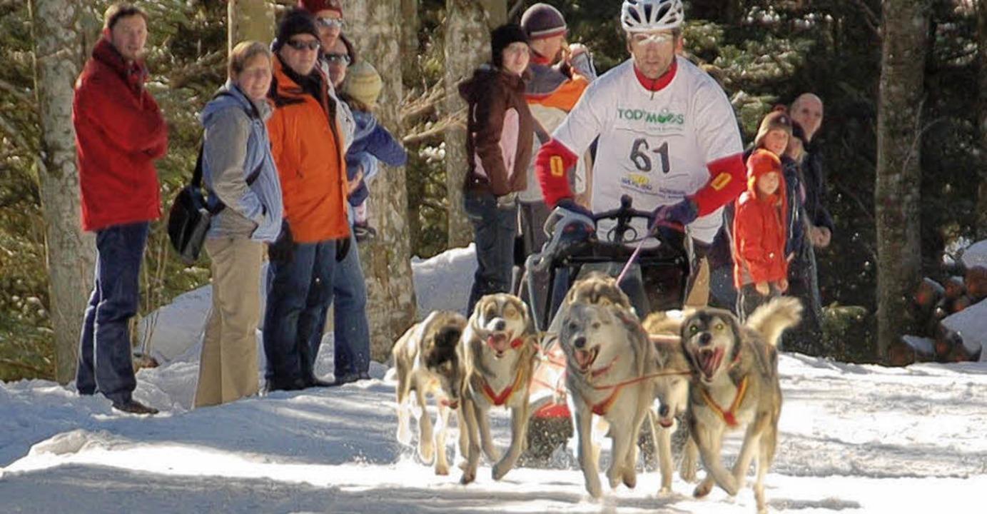 Die Gemeinde Todtmoos will ihren Ruf a...s Schlittenhunde-Rennsports festigen.     Foto: Archivfoto: Stefan Sahli