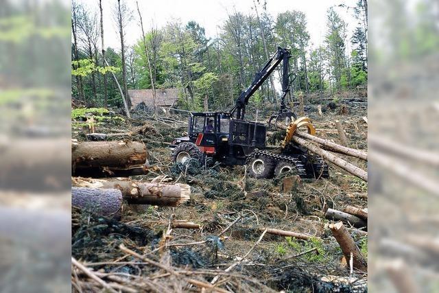 Waldschäden in der Ortenau deutlich geringer als befürchtet