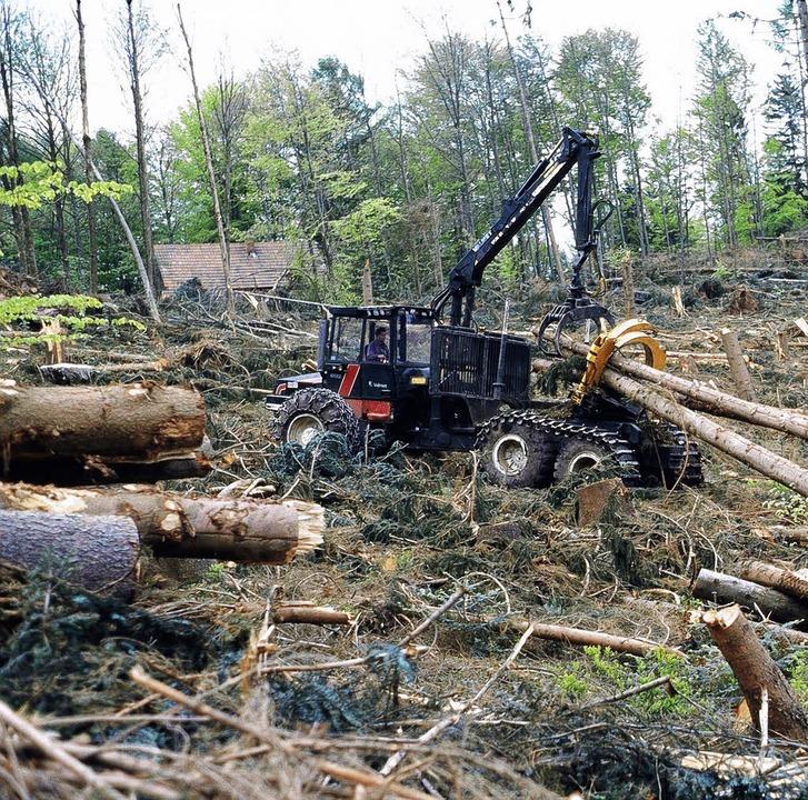 Die Waldschäden in der Ortenau halten sich in Grenzen.    Foto: bz