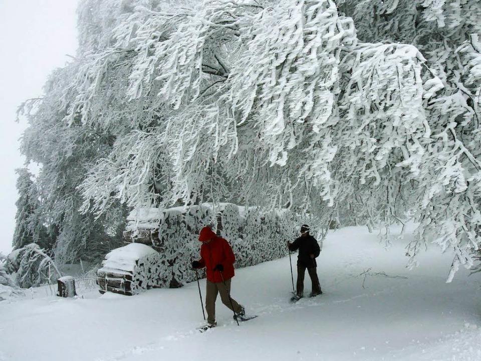 Schneeschuhwanderer können guten Gewis...egen bleiben und steile Hänge meiden.   | Foto: Rolf Haid/dpa