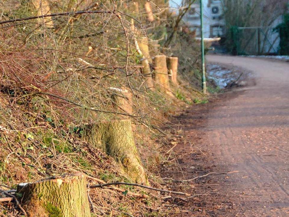 Entlang des Radwegs wurden Eschen und Robinien gefällt.  | Foto: Gerhard Walser