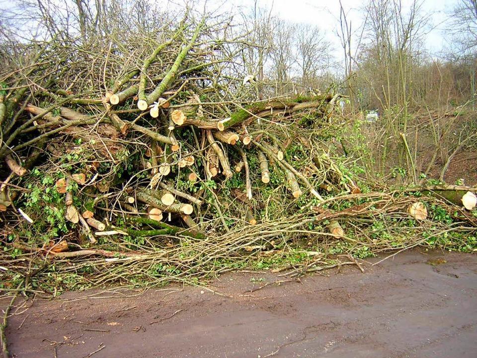 Meterhoch stapelt sich das geschlagene Holz und Gestrüpp.  | Foto: Gerhard Walser