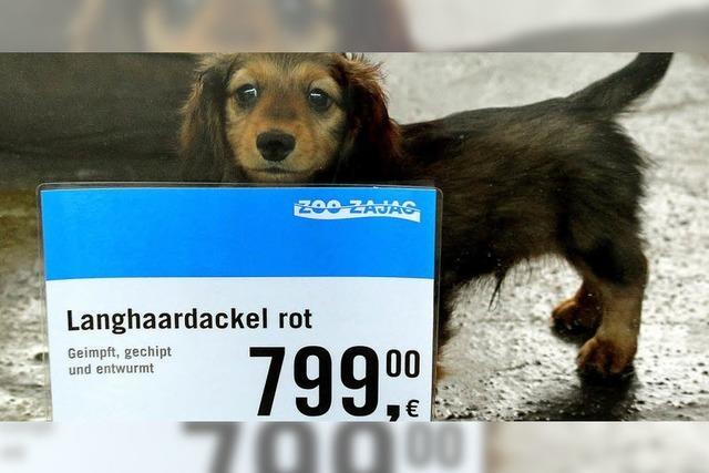 Welpen aus dem Tiersupermarkt