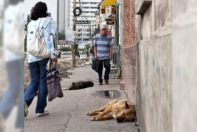 Rumänien: Das Töten von Straßenhunden ist wieder illegal