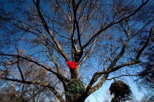 Umstrittene Baumfällarbeiten für Stuttgart 21 können beginnen