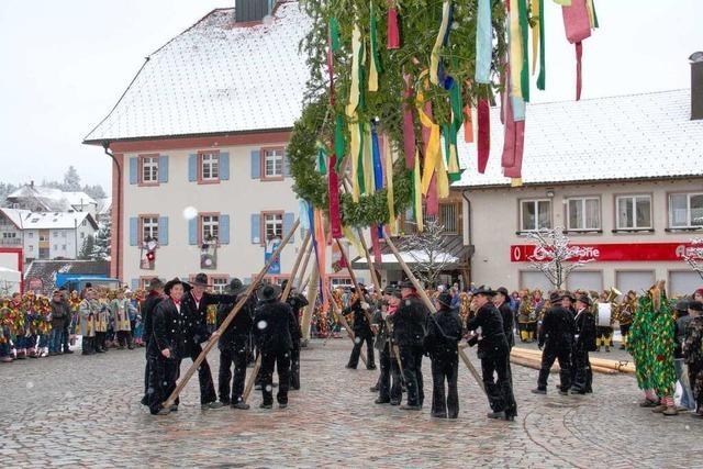 Fotos: Narrenbaum in Grafenhausen steht