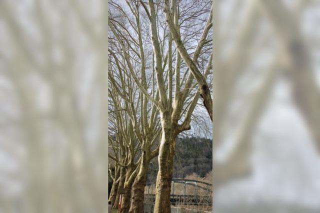 Wo sind die neuen Bäume?