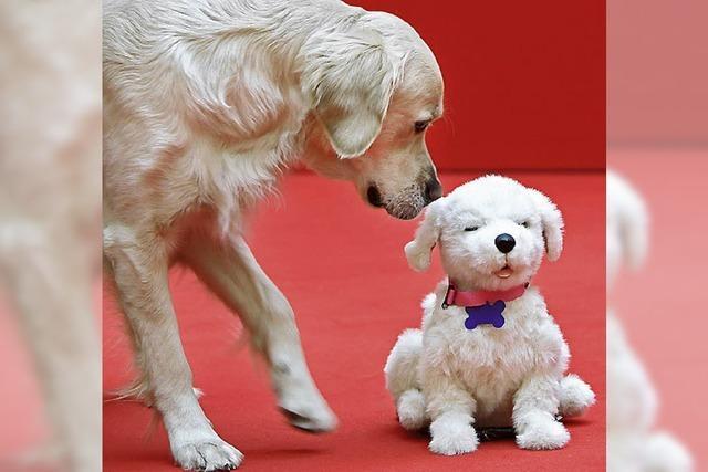 Kampfansage an Hundehalter