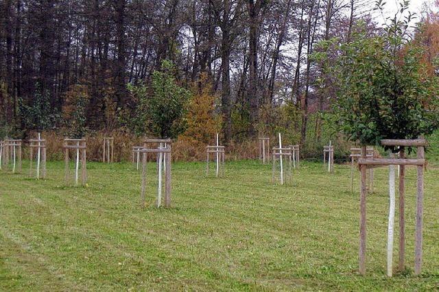 Bauhof fällt alte und pflanzt neue Bäume