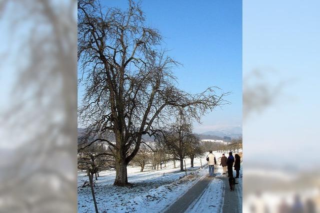 Der Birnbaum als Kulturgut