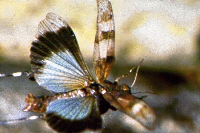 Gesicherte Lebensräume zum Erhalt der Artenvielfalt