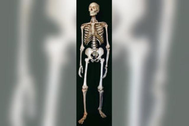 Ein Skelett erzählt