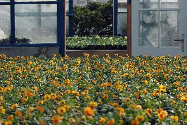 Für die Stadtgärtner kann der Frühling kommen