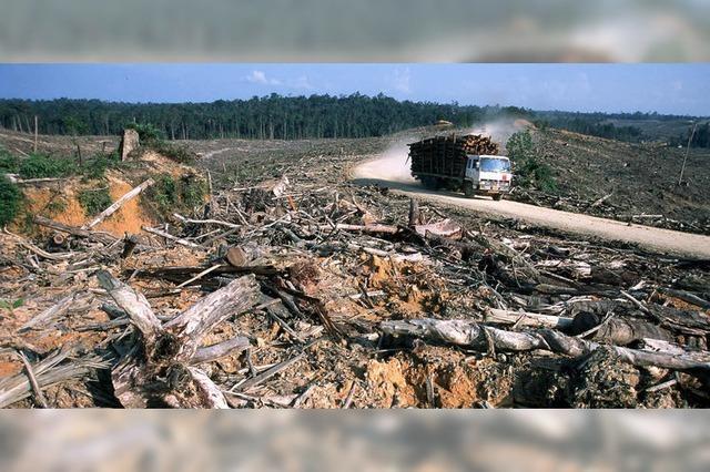 Biosprit kann schlimmer sein als Erdöl