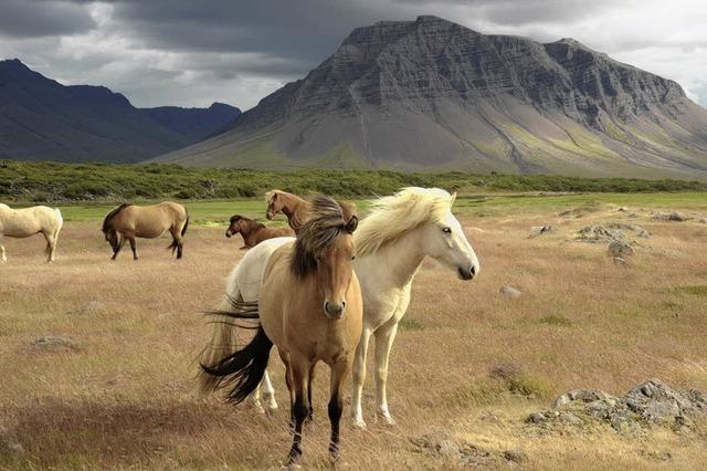Multivisionsvortrag über Island