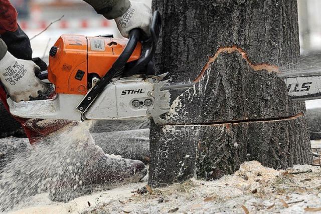 Kritiker der Baumfällaktion gerät in die Kritik