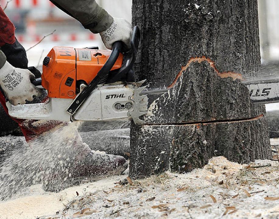 Wer die Säge am Baum fordert, muss gute Gründe vorweisen können.  | Foto: dpa
