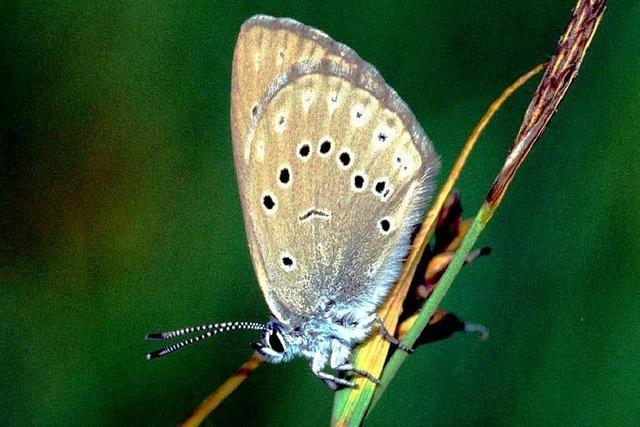Schmetterlinge und Libellen verzögern Tiefbrunnen-Projekt
