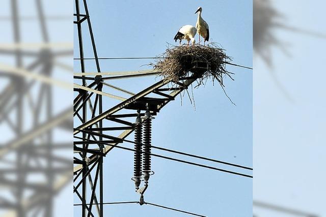 Tödliche Stromstöße für Zugvögel