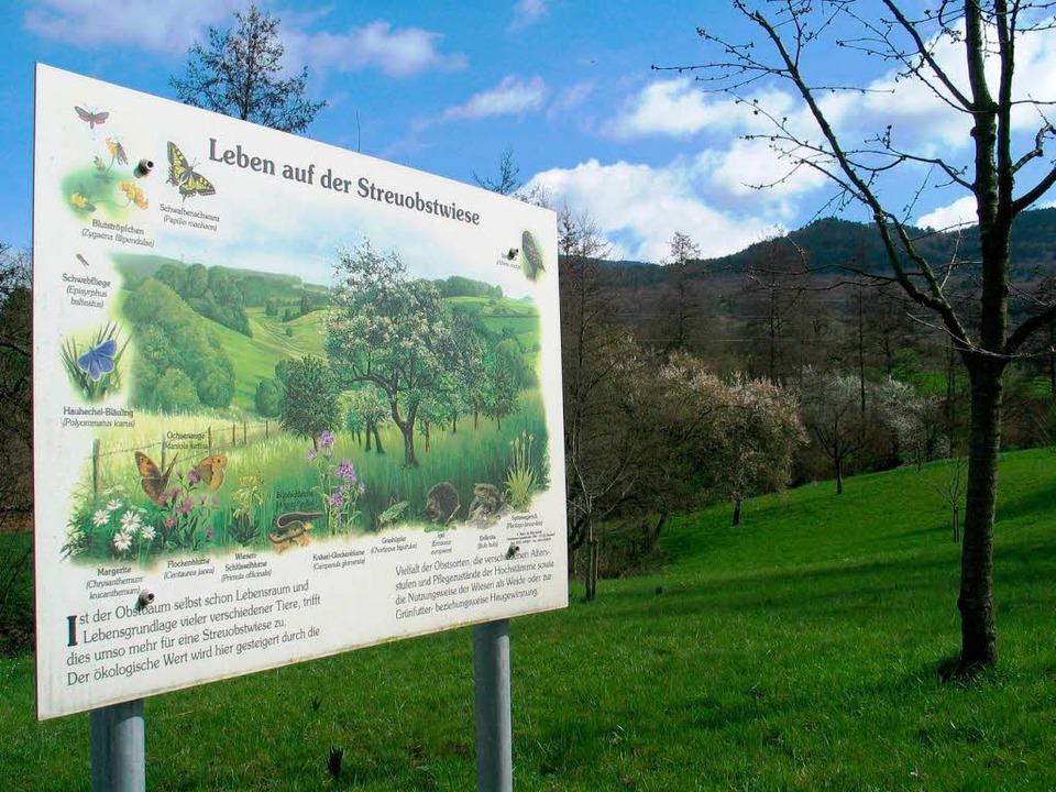 Streuobstwiesen sind wichtig für den A... für Naturschutzverbände mit gepflegt.  | Foto: Jutta Schütz