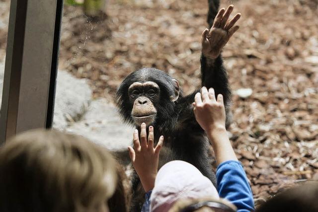 2011 war für den Basler Zoo das beste Jahr
