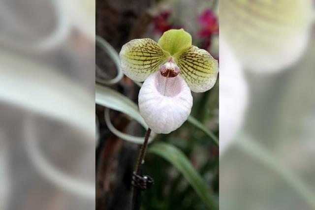 Orchideenschau im Park